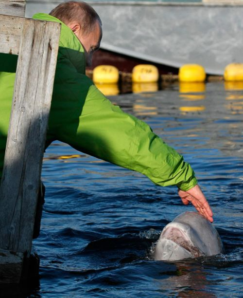 Vladimir Putin mazi delfina
