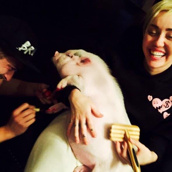Njen novi ljubimac ima manikir! (foto: instagram)