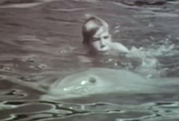 delfin-zoofil