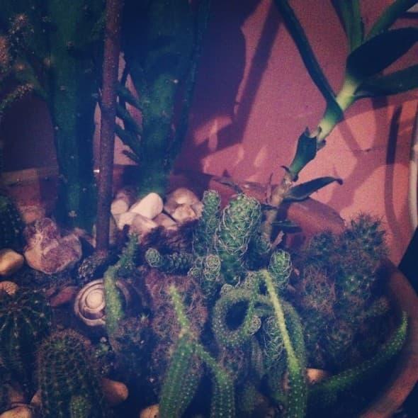 elena risteska kaktus