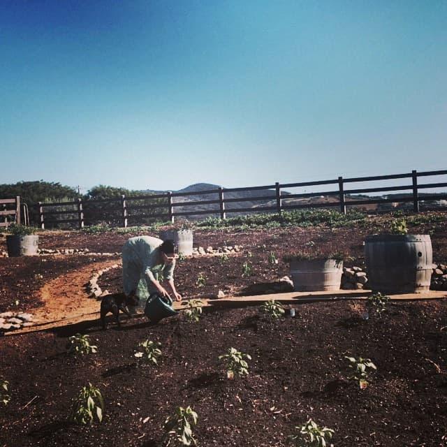 Gaga na farmi (foto: Instagram)