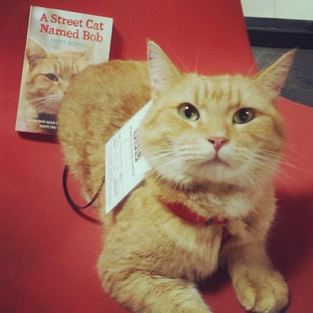 Cat Bob (foto: Instagram/streetcatnamedbob)